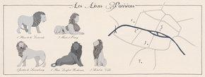 Les Lions Parisiens